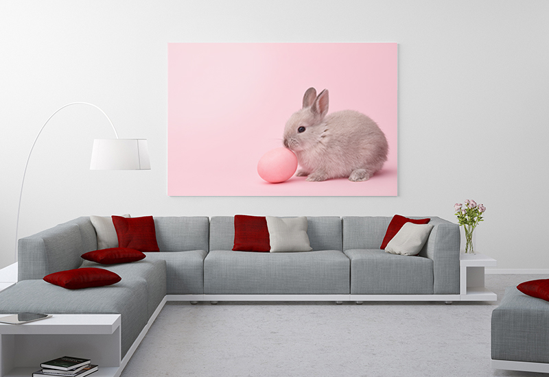 pet photography wall art