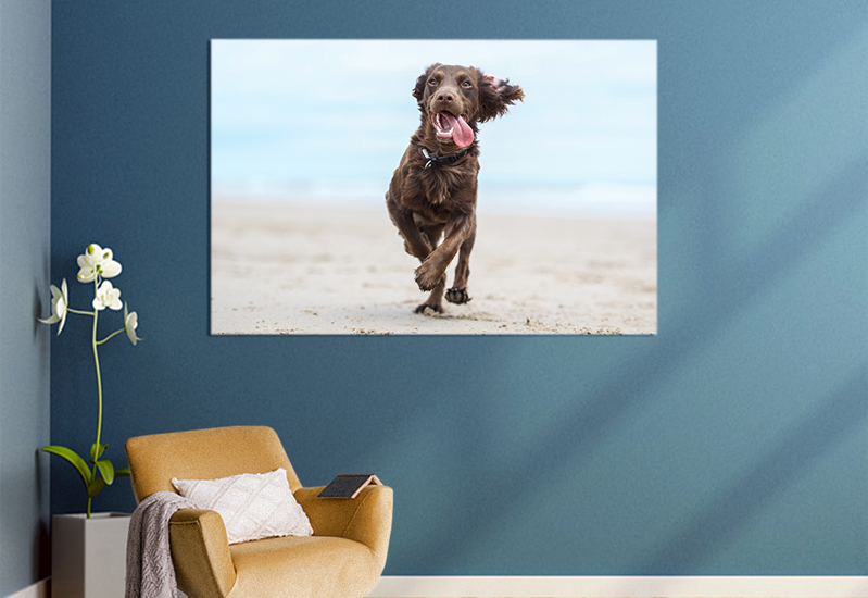 pet pictures for home